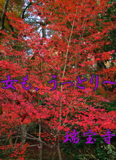 桜と紅葉で女もうっとり!神戸有馬デートの穴場スポット「瑞宝寺公園」が最高