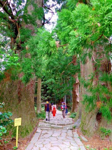 熊野古道と夫婦杉と平安衣装
