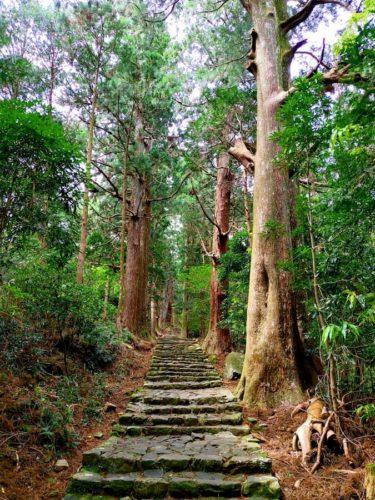 熊野古道の木々と一本道
