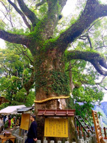 熊野那智大社の木