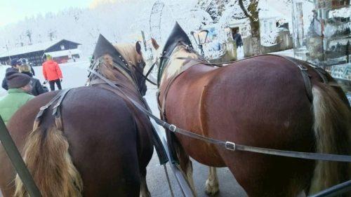馬車での馬のお尻