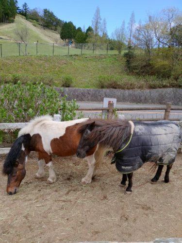 六甲山牧場の馬