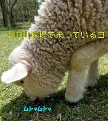 六甲牧場のデ-ト 景色と動物で彼女を狙い撃ち! 【神戸】