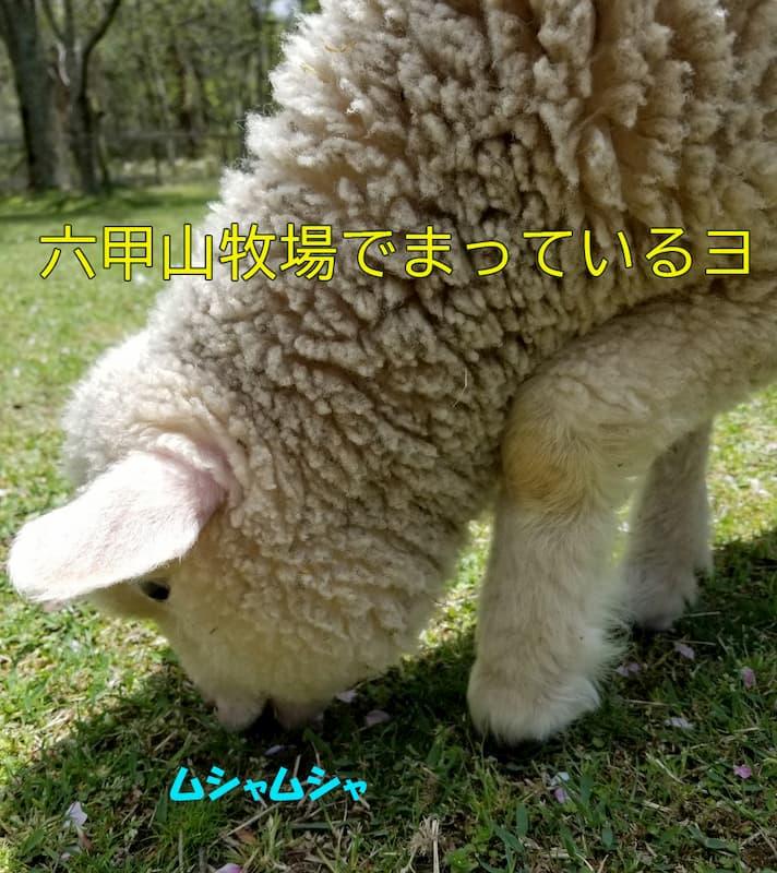 六甲山牧場のフォト