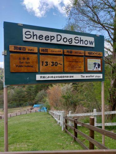 六甲山牧場のシープドックショー