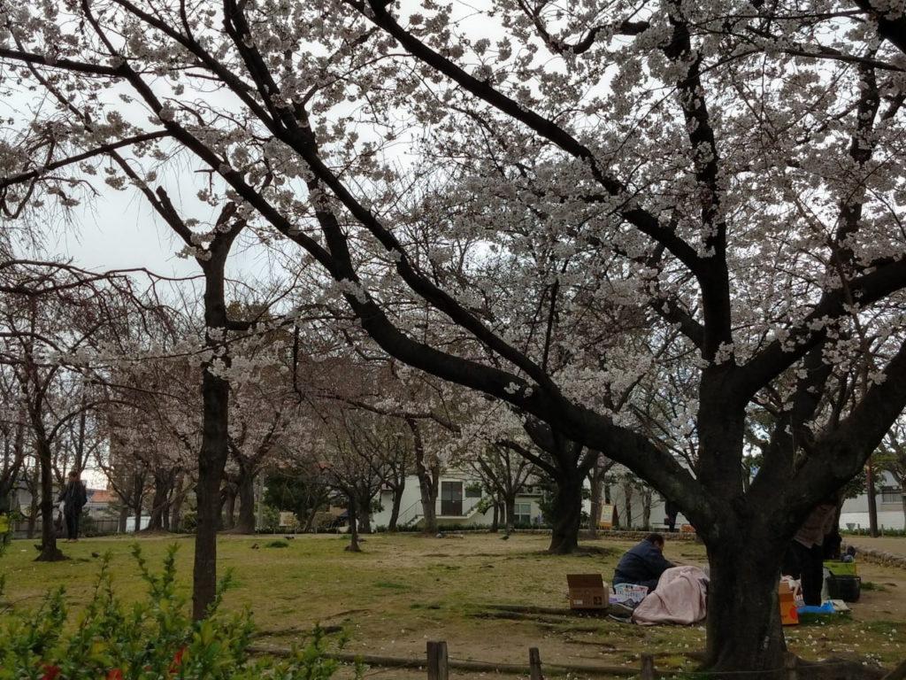 兵庫県尼崎市の近松公園の桜