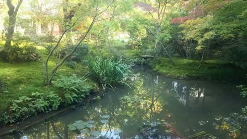 圓光寺の栖龍池