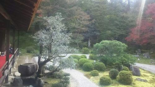 曼殊院の紅葉の庭の景色