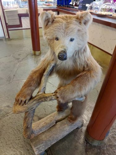 サーリセルカの熊